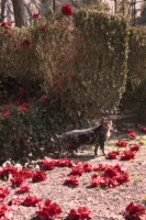 Red flowers and a cat